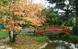 jardin-japones-puente